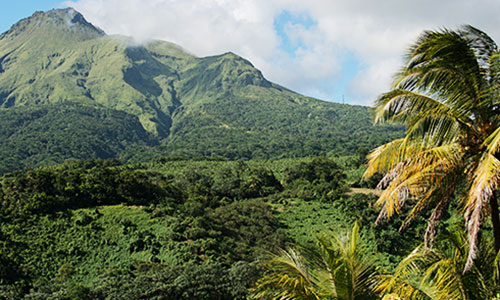 Tropical Forest in Martinique